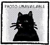 "Adult Female Cat - Siamese: ""Scarlett"""