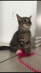 Adorable kitten ready for re-homing!