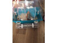 6 month old dwarf hamster
