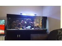 Full Marine fish tank 6ft x 2 ft x 2ft