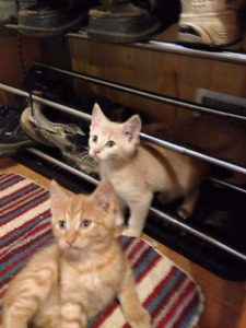 Many kittens avail@Pets Need Love 2 Rescue