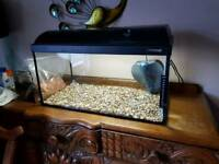 Fishtank with light filter gravel and food