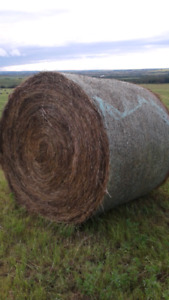 Hay bales for sale