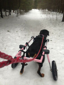 Wheelchair for dogs