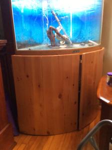 50 Gallon Bowfront Corner Aquarium