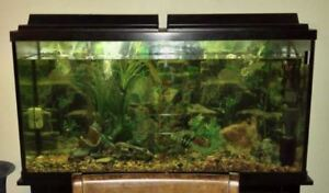 60 Gallon Fish Tank with everything needed except the fish