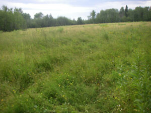Free for harvesting - aprox. 30 acre field of standing hay