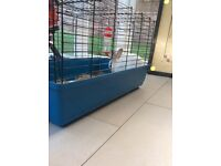 Rabbit female sale with cage