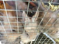 Cute baby rabbits ready for new home