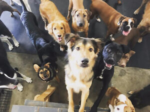 Paws Here Dog Daycare
