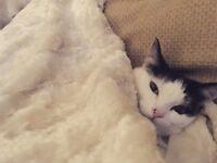 Missing cat !!