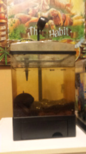 Free betta tank and filter