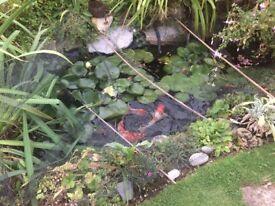 Fish & pond contents