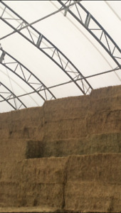 hay big square for sale