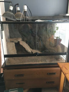 60 Gallon tank with complete cricket/bearded dragon supplies