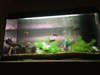 "Tropical Fish Tank 31"" x 14"" Acessories Food & Fish"