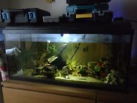 Full tropical set up, 160 litres, in excellent condition.