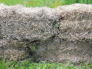 STRAW--PREFER ROTTING/UNWANTED, BUT WILL TAKE GOOD STRAW