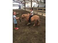 little dun mare