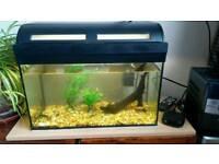 40 litre Aquarium for sale