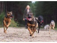 The Crate Escape Dog walking - dog walker covering Sheringham, Cromer and surrounding areas