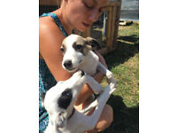 rescued puppys and mum looking for a loving forever home