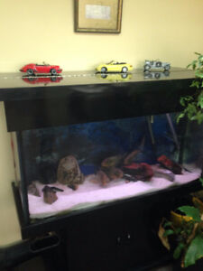 80 GALLON FISH TANK / with cabinet and all acces- inclu fish