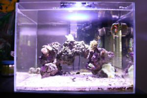 10G NANO TANK - FULLY EQUIPPED NEED GONE!!