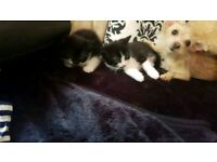 2 beautiful kittens left