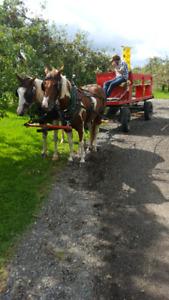Voiture pour chevaux