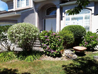 Hedge and Shrub trimming, Large and small
