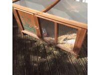 Dwarf rabbit & hutch for sale
