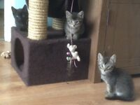3 Beautiful playful kittens