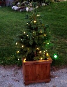 Small Blue Spruce