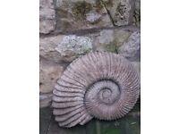 Unusual Fossil Garden or inside ornament