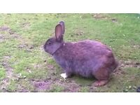 2 yr old rabbit called tinkerbell