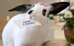 5 rabbits are available for adoption!