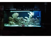 complete marine fishtank reef bundle 300L with table sump live rock coral sand and lot more
