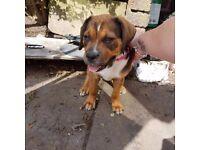 Puppy 11 week