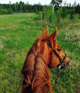 Apha gelding up for part lease