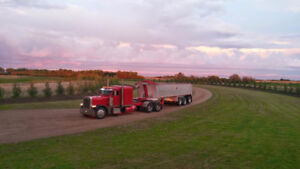 Looking for a Peterbilt 379, 388, 389 or Kenworth W900