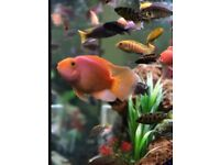 Fish Tank cleaner/ fishes to sell