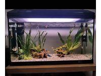 120l aquarium with accessories