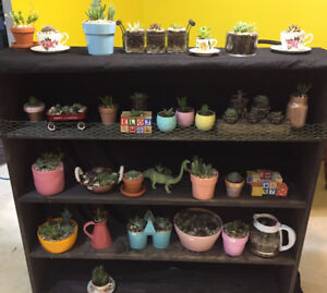Rose River Succulents  -sustainable, cute, cheap, and GMO free!