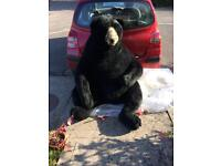 """Life size grizzly bear soft toy 45"""" high"""