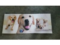 Labrador puppy canvas