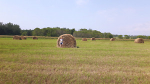 hay for sale 5x5