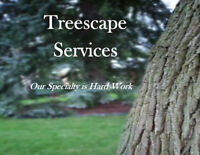 Professional and Insured - Tree Removal/Pruning/Yard Cleanup