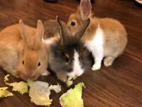3 adorable baby rabbits for sale
