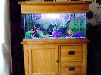 Large pin tropical fish tank full set up with fish